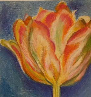 "Flower pastel 5.5x6.5 inches on Canson pastel paper 19""x12"" Tulip Verigated pastel painting"