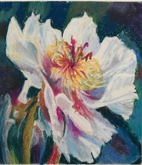 Pastel Flowers Peony